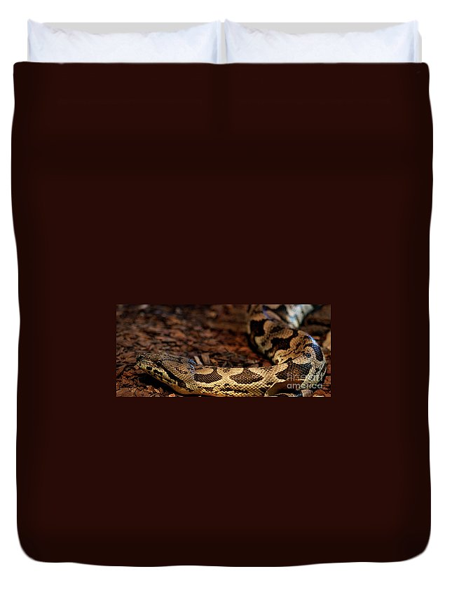 Snake Duvet Cover featuring the photograph Sinti by Linda Shafer