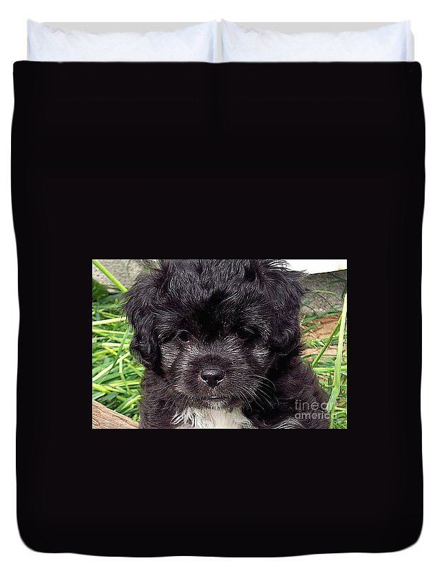 Baby Duvet Cover featuring the photograph Sissy by Robert Orinski