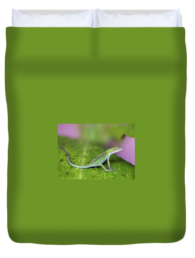 Lizard Duvet Cover featuring the photograph Sitting Pretty by Marilyn Hunt