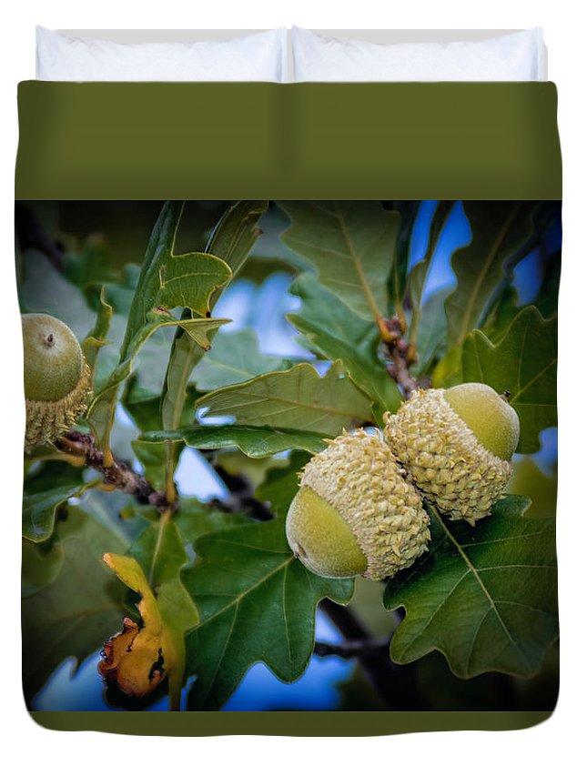 Green Duvet Cover featuring the photograph Sky Lit Oak Acorns by LeeAnn McLaneGoetz McLaneGoetzStudioLLCcom