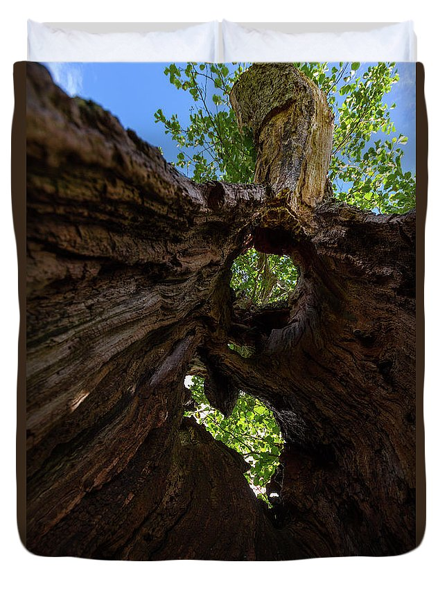 Cumbria Lake District Duvet Cover featuring the photograph Sky View Through A Hollow Tree Trunk by Iordanis Pallikaras