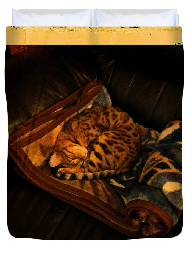 Barbara Griffin Duvet Cover featuring the photograph Sleeping Cat Digital Painting by Barbara Griffin