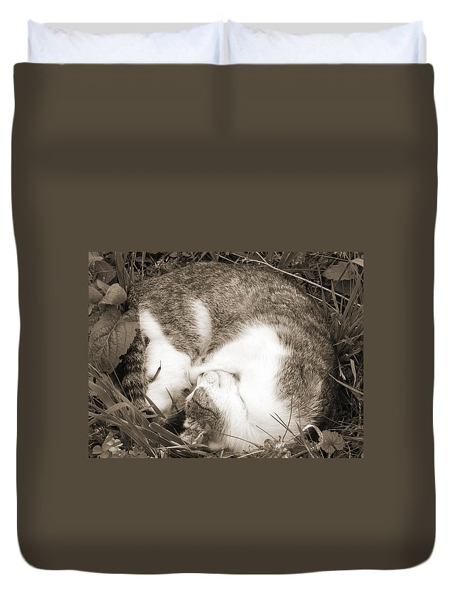 Pets Duvet Cover featuring the photograph Sleeping by Daniel Csoka