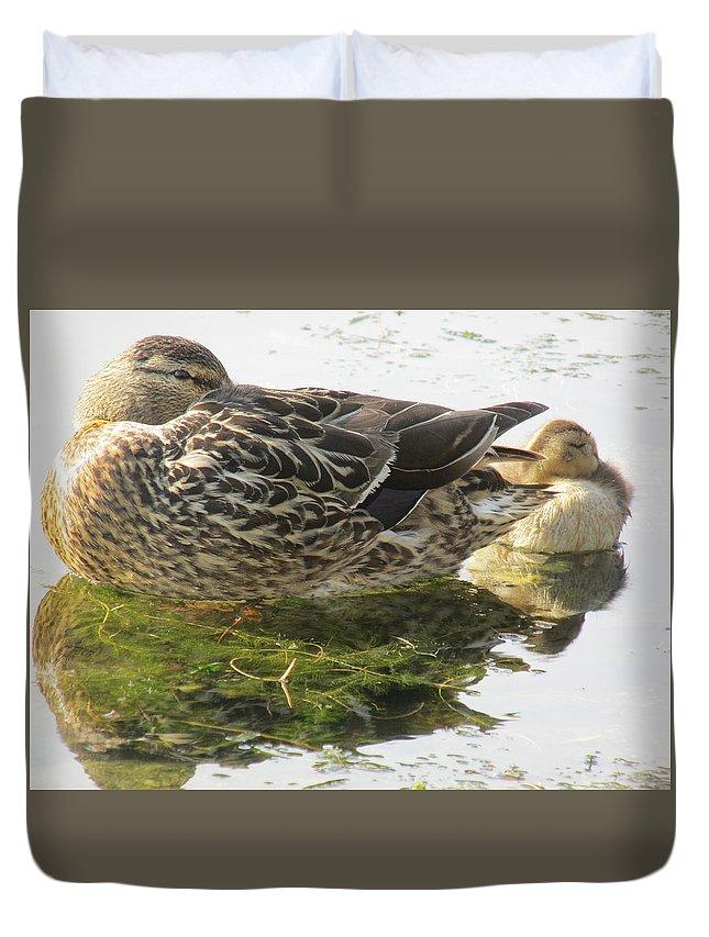 Mallard Ducks. Duvet Cover featuring the photograph Sleeping Ducks. by Mike Homblette