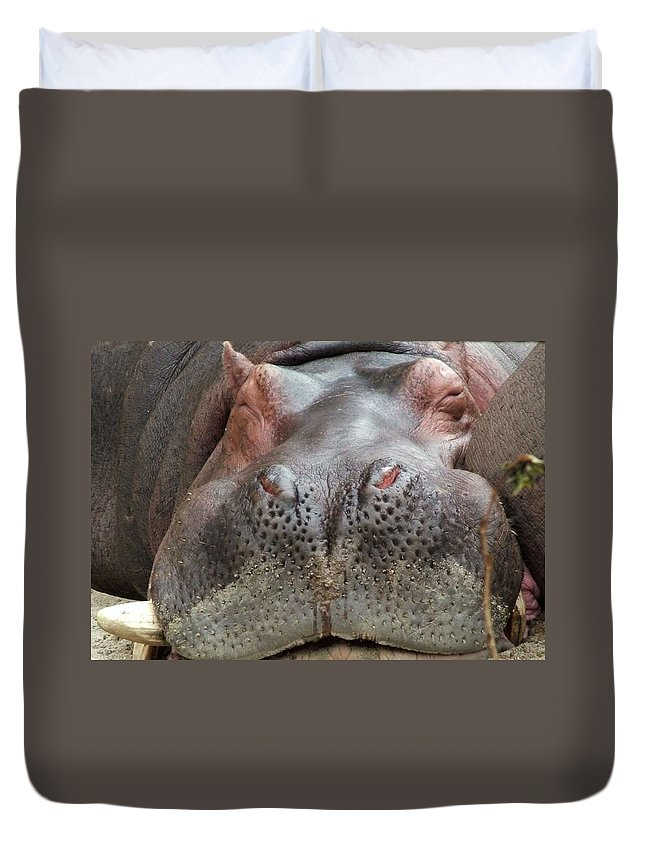Hippopotamus Duvet Cover featuring the photograph Sleeping Hippo by Tiffany Vest