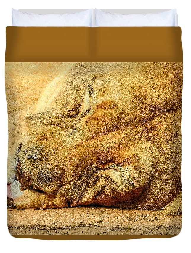 Animal Duvet Cover featuring the photograph Sleeping Lion by Ches Black