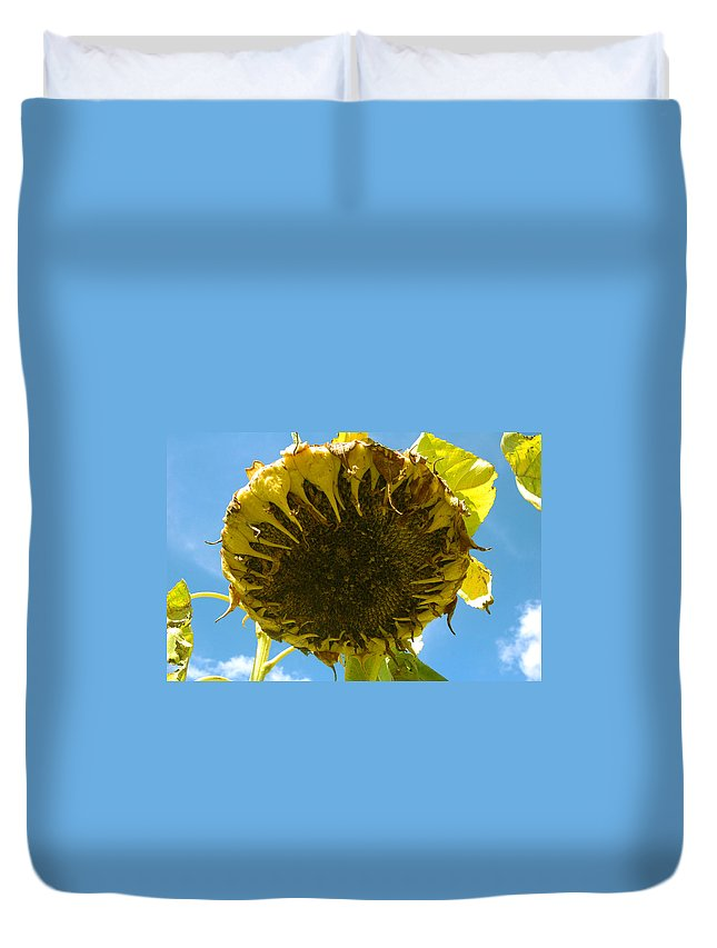 Sunflower Duvet Cover featuring the photograph Sleeping Sunflower by Trish Hale