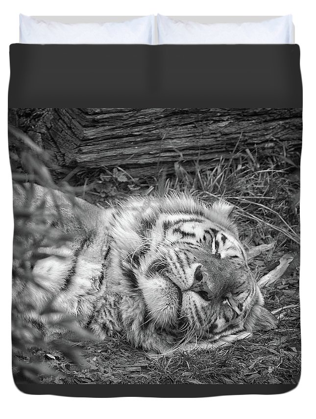 Wild Duvet Cover featuring the photograph Sleeping Tiger by Martin Newman