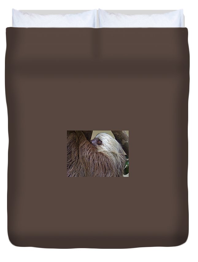 Sloth Duvet Cover featuring the photograph Sloth by Dolly Sanchez