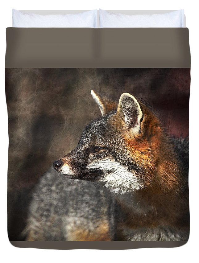 Gray Fox Duvet Cover featuring the photograph Sly As A Fox by Karol Livote