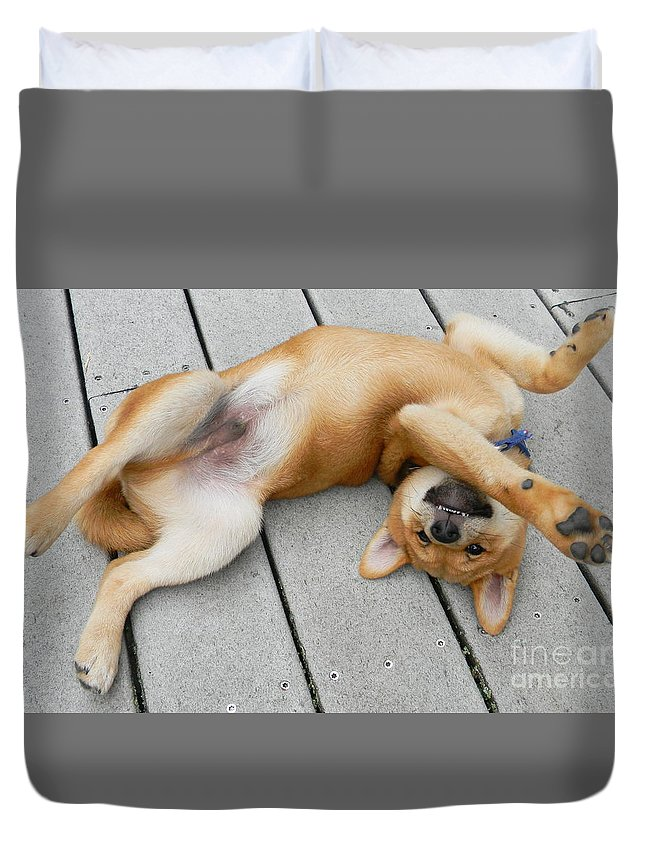 Puppy Inu Shiba 8weeks Toothy-grin Big Happy Smile Duvet Cover featuring the photograph Smiling Puppie by Expressionistart studio Priscilla Batzell