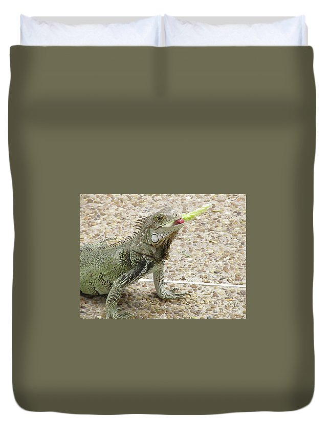 Iguana Duvet Cover featuring the photograph Snacking Iguana On A Concrete Walk Way by DejaVu Designs