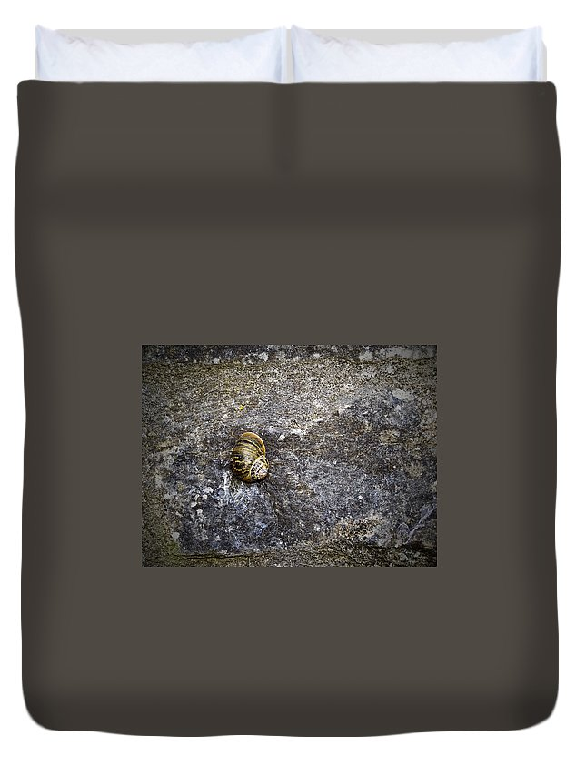 Irish Duvet Cover featuring the photograph Snail At Ballybeg Priory County Cork Ireland by Teresa Mucha