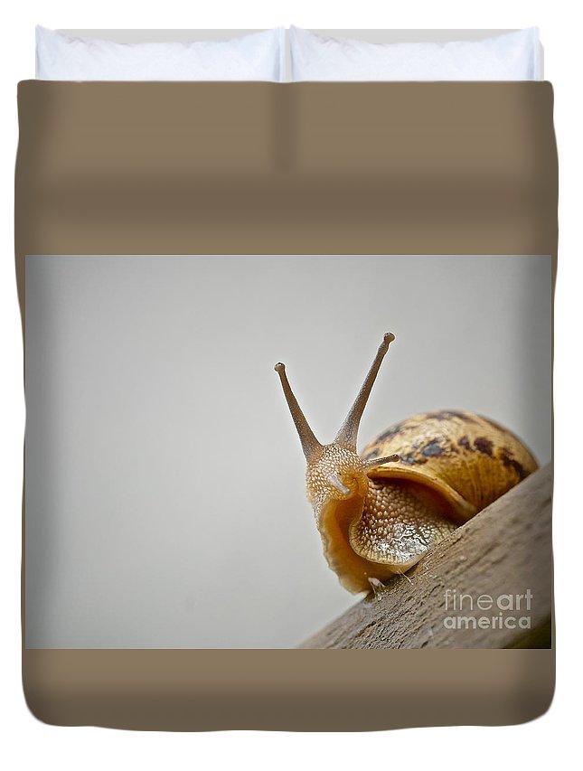 Slug Duvet Cover featuring the photograph Snail by Elisabeth Derichs