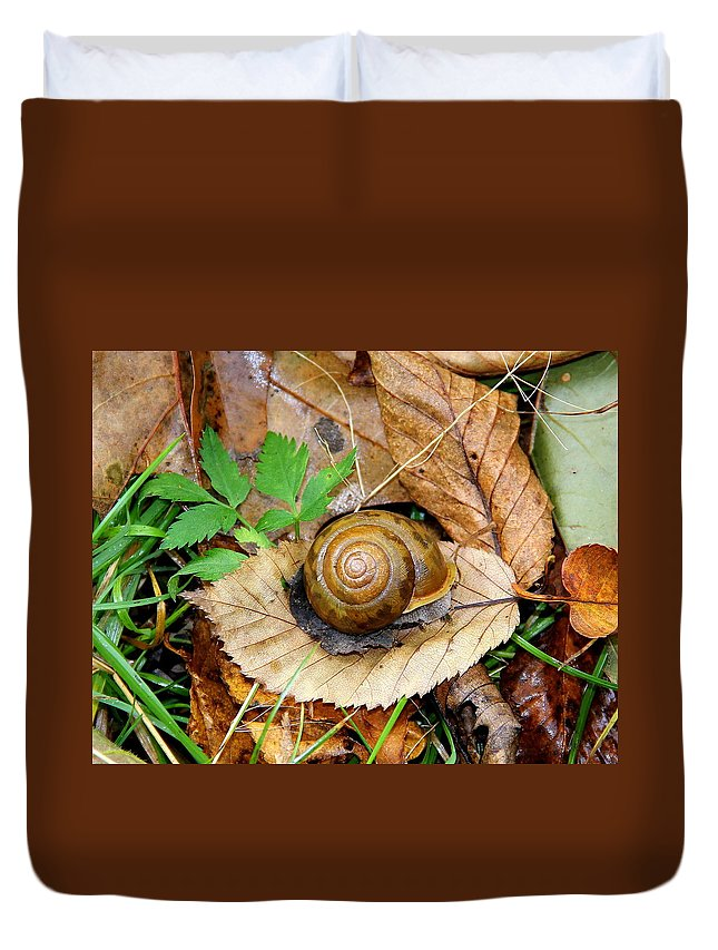 Snail Duvet Cover featuring the photograph Snail Home by Allen Nice-Webb