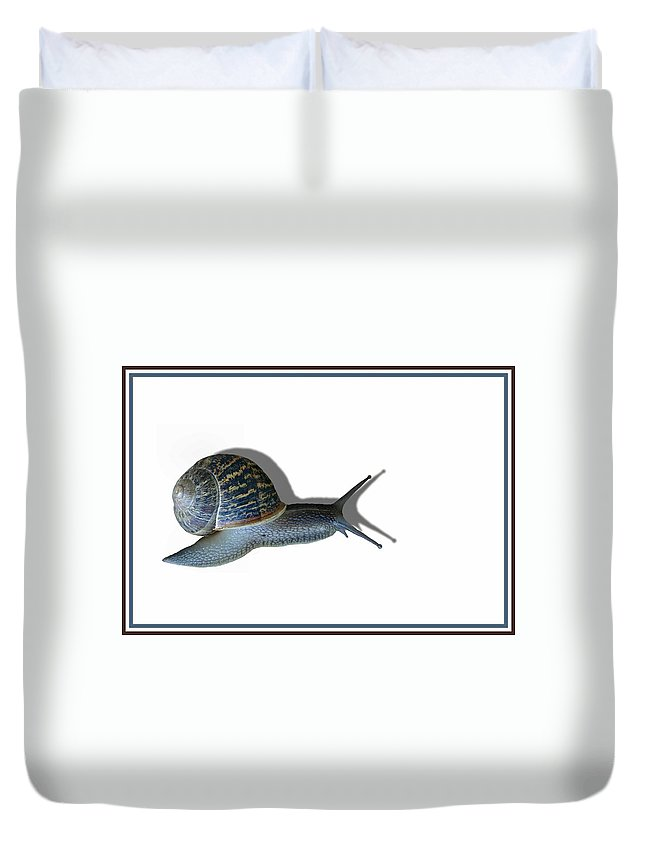 Snail Duvet Cover featuring the photograph Snail Mail by Kristin Elmquist