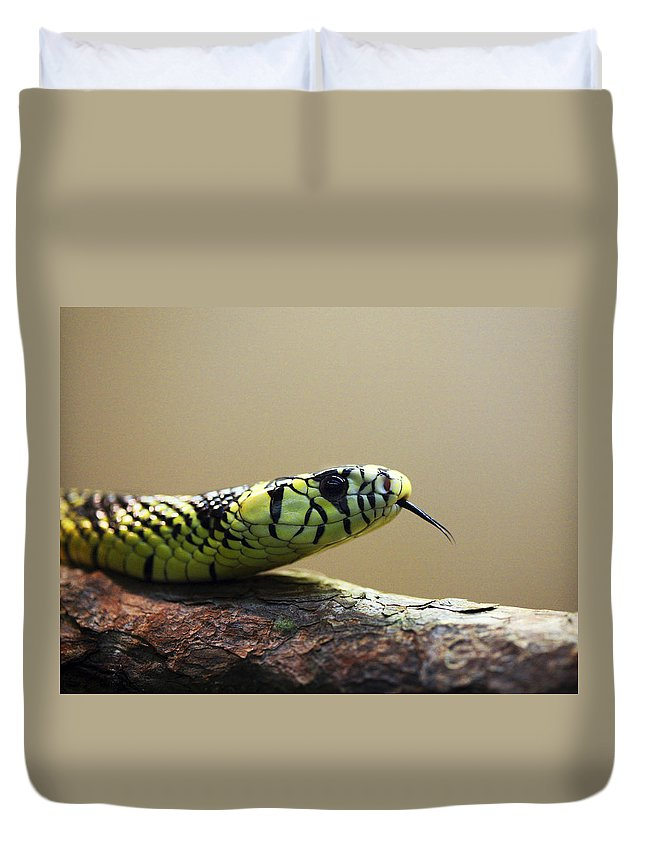 Snake Duvet Cover featuring the photograph Snake Tongue by Marilyn Hunt