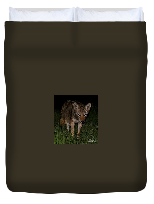 Wildlife Duvet Cover featuring the photograph Sneaking A Peek by Traci Hallstrom