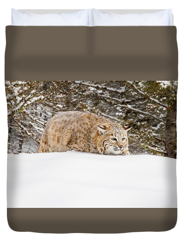 Cat Duvet Cover featuring the photograph Sneaky Cat by Mike Centioli