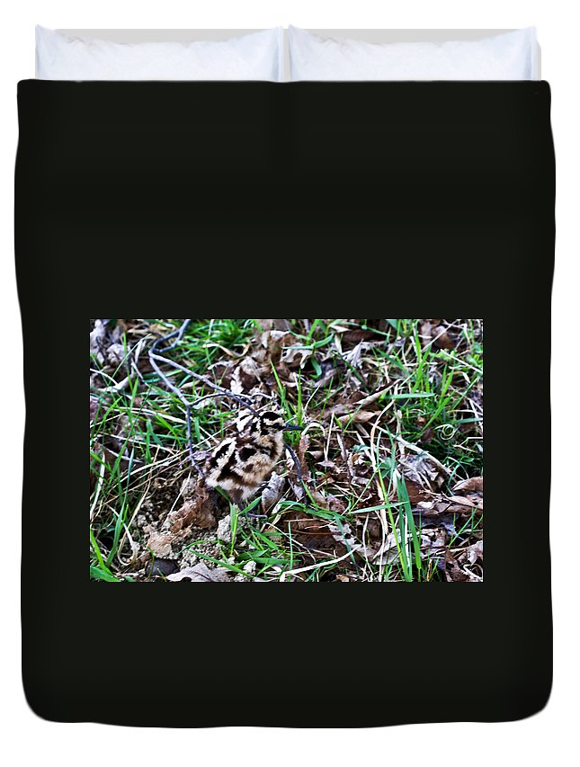 Snipe Duvet Cover featuring the photograph Snipe In Camouflage 2 by Douglas Barnett