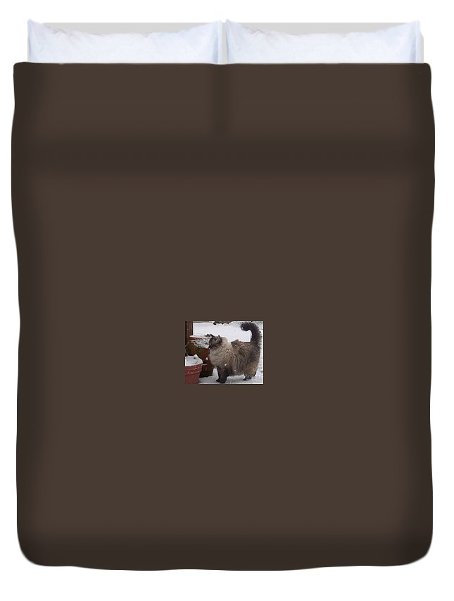 Cats Duvet Cover featuring the photograph Snow Kitty by Debbi Granruth