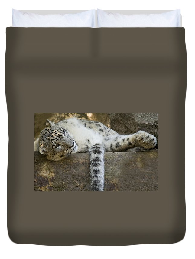 Snow Leopard Duvet Cover featuring the photograph Snow Leopard Nap by Mike Dawson