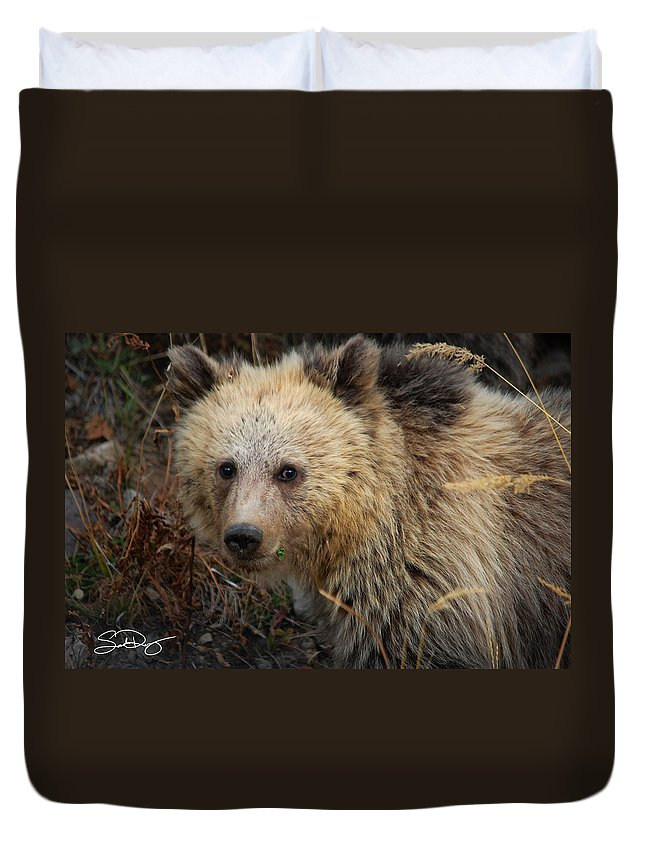 Snow Duvet Cover featuring the photograph Snow The Grizzly by Sadie Dimsey