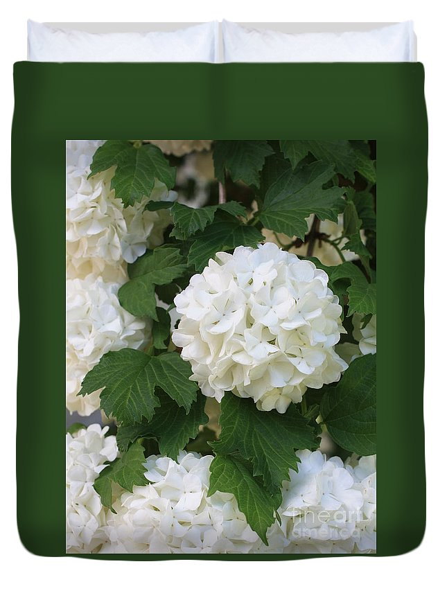 Snowball Tree Duvet Cover featuring the photograph Snowball Tree With Delicate Leaves by Carol Groenen