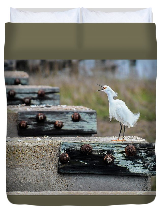 Avian Duvet Cover featuring the photograph Snowy Egret #2 by Tim Bond