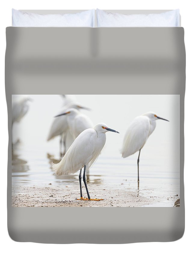 Bird Duvet Cover featuring the photograph Snowy Egret And Friends by Tony Hake