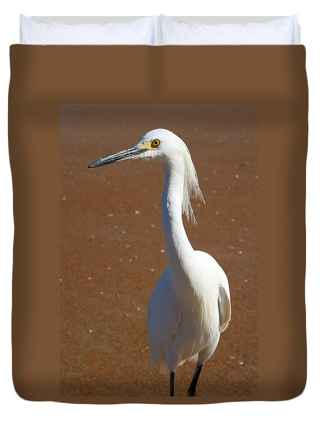 Bird Beach Sand White Bright Yellow Curious Egret Long Neck Feather Eye Ocean Duvet Cover featuring the photograph Snowy Egret by Andrei Shliakhau