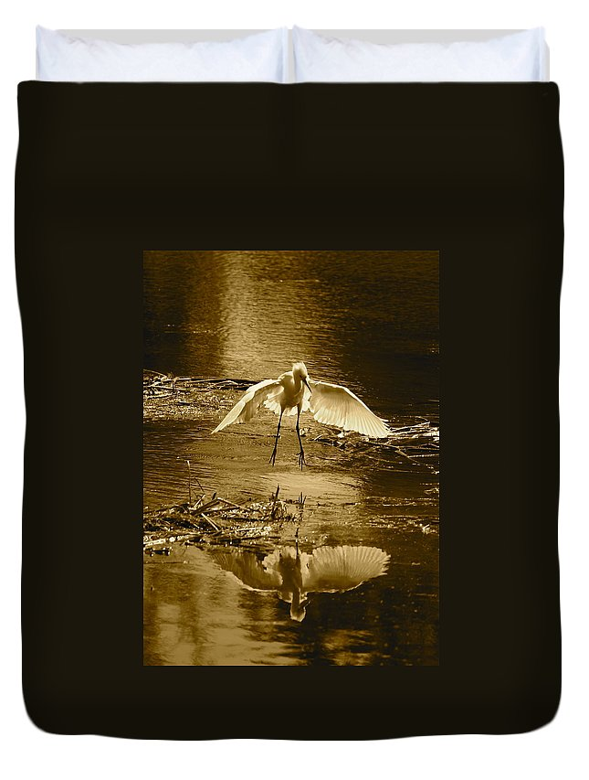 Bird Duvet Cover featuring the photograph Snowy Egret Landing With Golden Tones by Carol Groenen