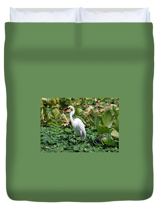 Wild Duvet Cover featuring the photograph Snowy Egret by Victor Alcorn