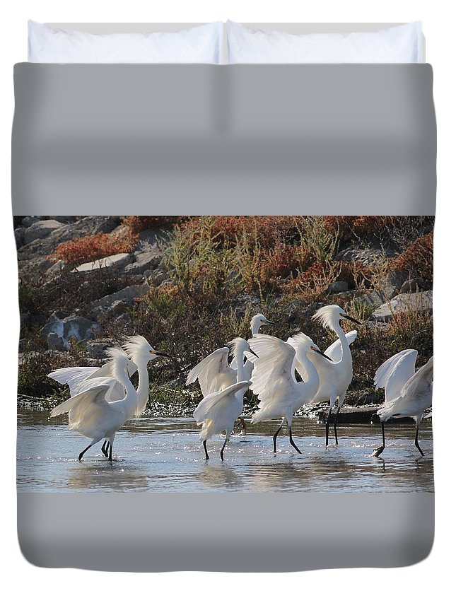 Bird Avian Home D�cor Prints Fine Art Wall Room Office Lobby Hotel Motel Inn Qow Vida Leben Vogelart Birdwatchers Fishwatchers Snow Gallerie Mobile Monami Gruppe Mass Natur Sfbay California Usa Wildlife Refuge Duvet Cover featuring the photograph Snowy Egrets by Elka Lange