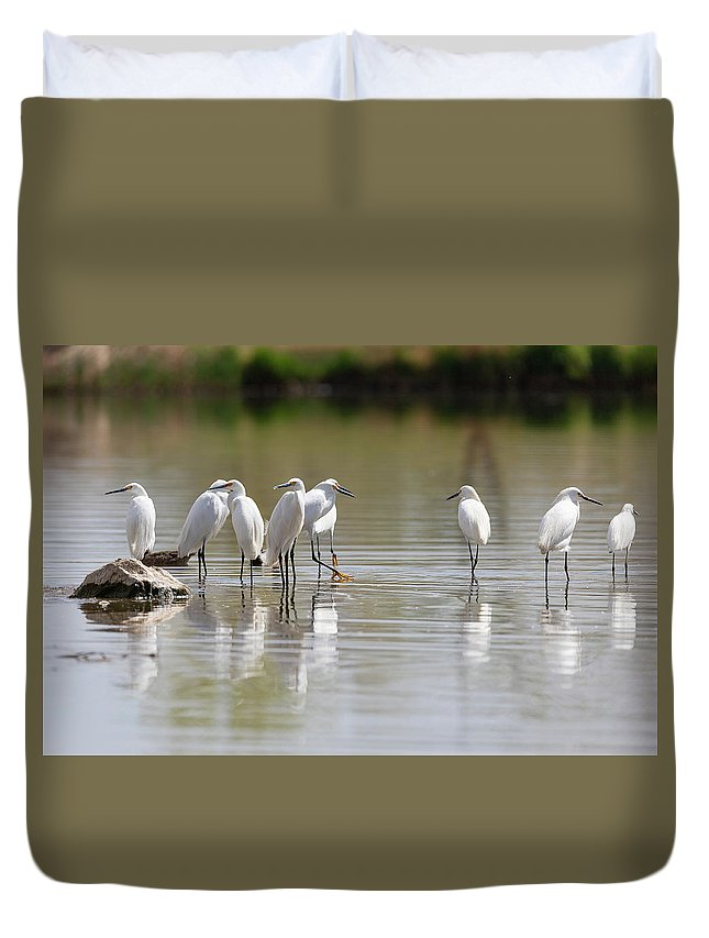 Bird Duvet Cover featuring the photograph Snowy Egrets On Calm Water by Tony Hake