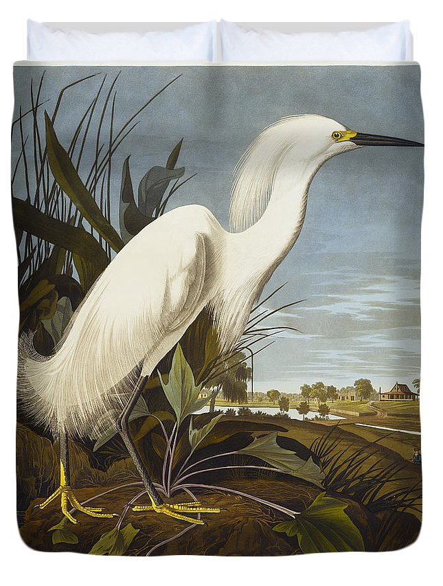 Snowy Heron Or White Egret / Snowy Egret (egretta Thula) Plate Ccxlii From 'the Birds Of America' (aquatint & Engraving With Hand-colouring) By John James Audubon (1785-1851) Duvet Cover featuring the drawing Snowy Heron by John James Audubon