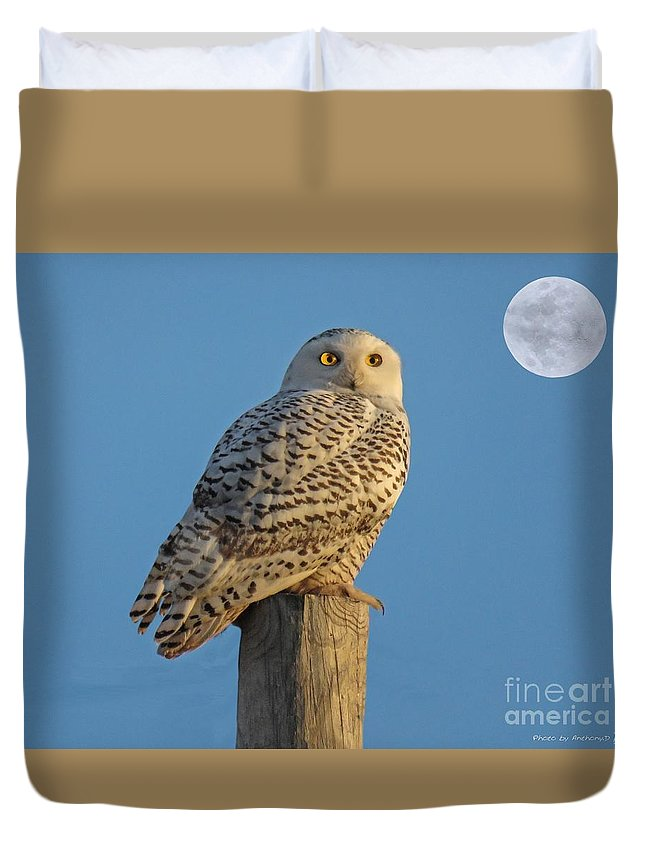 Bird Duvet Cover featuring the photograph Snowy Owl by Anthony Djordjevic