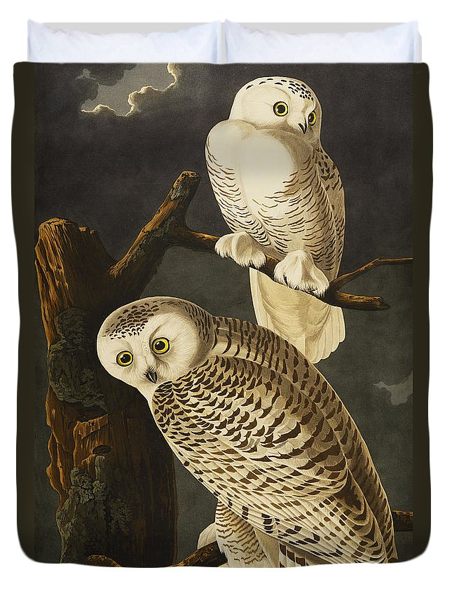 Snowy Owl (nyctea Scandiaca) Plate Cxxi From 'the Birds Of America' (aquatint & Engraving With Hand-colouring) By John James Audubon (1785-1851) Duvet Cover featuring the drawing Snowy Owl by John James Audubon