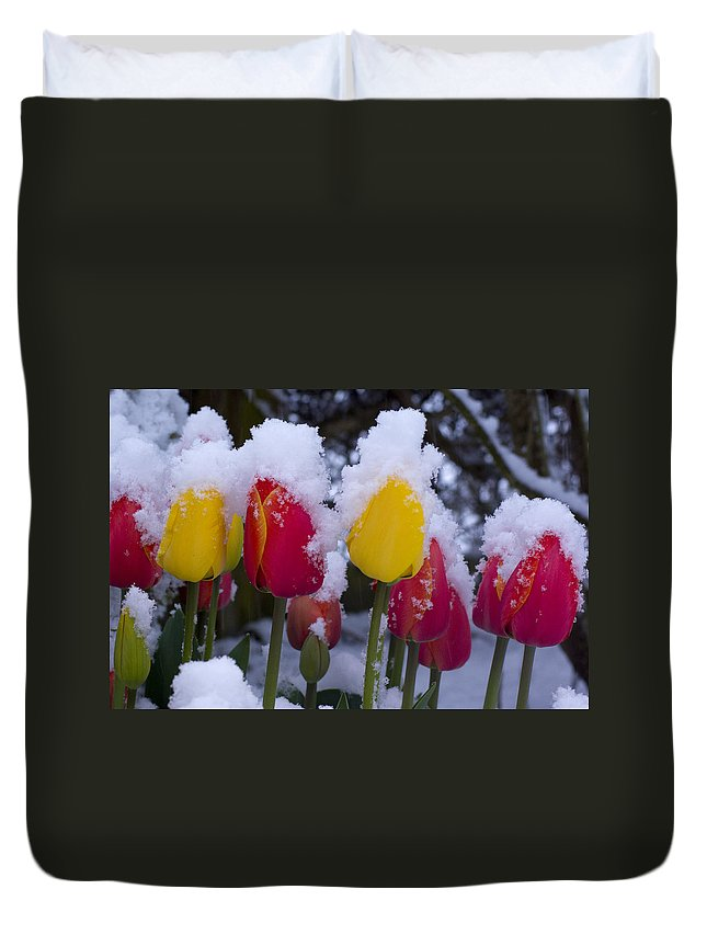 Tulips Duvet Cover featuring the photograph Snowy Tulips by Louise Magno