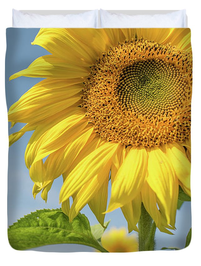 Sunflower Duvet Cover featuring the photograph Soaking Up The Sun by Amy Dooley