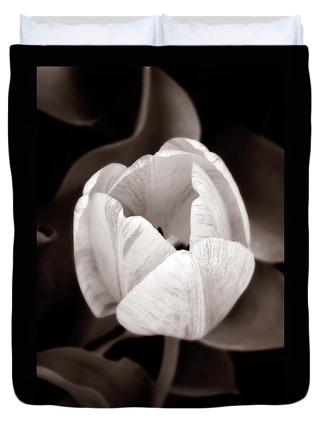 Black Duvet Cover featuring the photograph Soft And Sepia Tulip by Marilyn Hunt