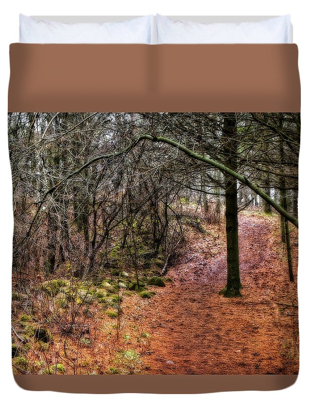 Canada Duvet Cover featuring the photograph Soft Light In The Woods by Phill Doherty