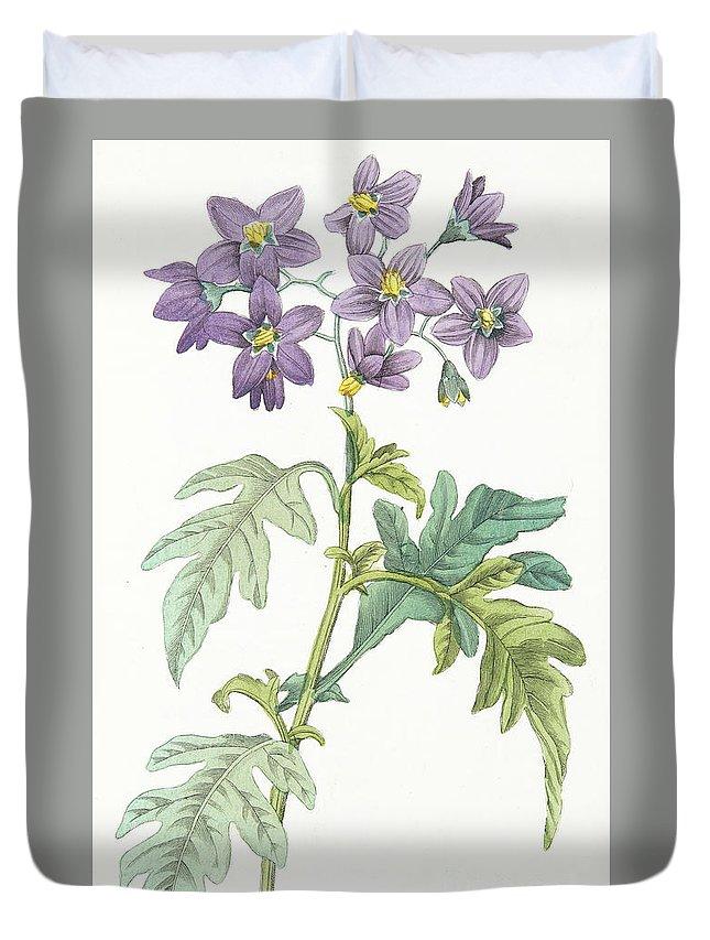 Solanum Quercifolium Duvet Cover featuring the painting Solanum Quercifolium by Antonio Piccioli