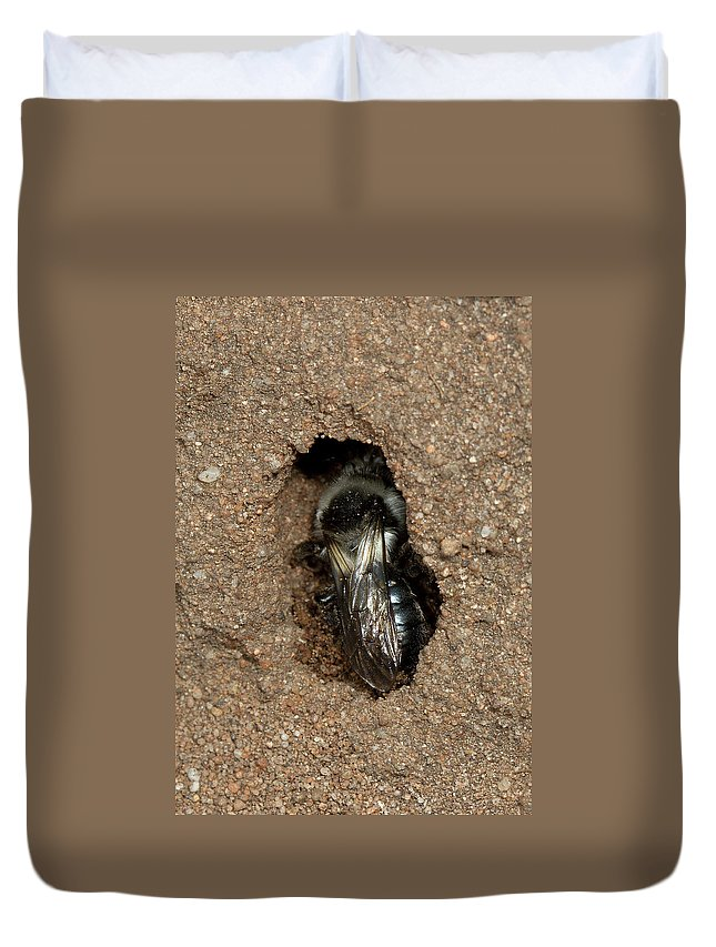 Solitary Bee Duvet Cover featuring the photograph Solitary Bee Andrena Cinearia by Bob Kemp