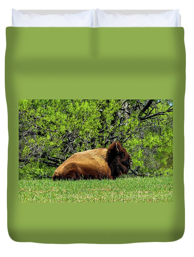 Texas Duvet Cover featuring the photograph Solitary Buffalo by Marilyn Burton