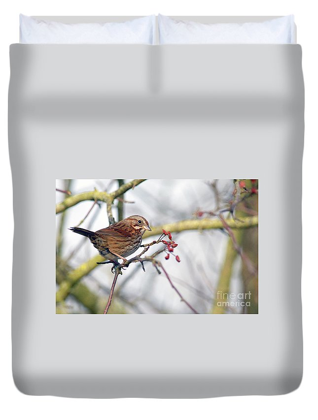 Song Sparrow Duvet Cover featuring the photograph Song Sparrow by Sharon Talson