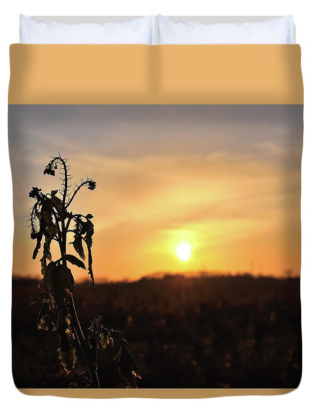 Sonnenuntergang Blume Flowwer Sky Himmel Duvet Cover featuring the photograph Sonnenuntergang by Scimitarable