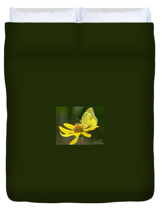 Southern Dogface Butterfly Duvet Cover featuring the photograph Southern Dogface Butterfly by Barbara Bowen