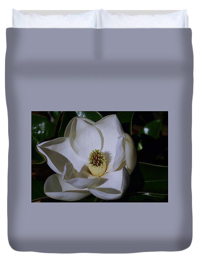 Magnolia Grandiflora Duvet Cover featuring the photograph Southern Magnolia by Sally Falkenhagen
