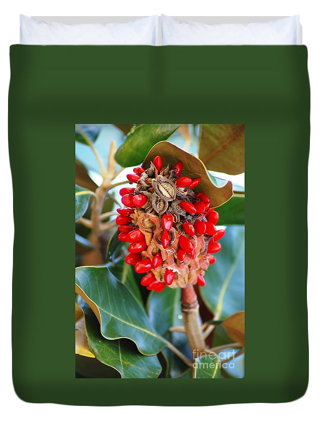 Magnolia Duvet Cover featuring the photograph Southern Magnolia Seedpods by Donna Bentley